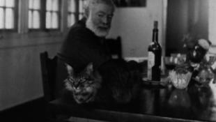 Bárki felmehet Hemingway lakására