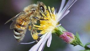 """A kokaintól még a méhek is """"elszállnak"""""""