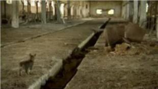 Mini állatmenhely Csernobilban