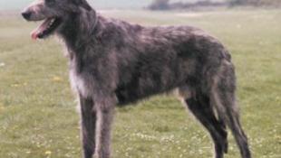 A legjobban színészkedő kutyát is díjazza Cannes