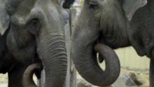 Az ünnepek alatt is nyitva lesz az állatkert