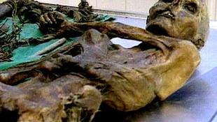 Halott emberek és állatok közszemlére téve