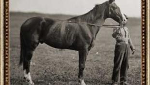 A titokzatos lófej visszatér