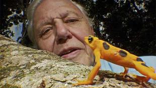Súlyos szívproblémákkal küzd David Attenborough