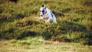 Repülő kutyahibrid a kalapács alatt