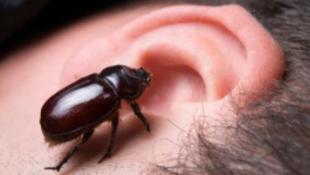 Mindenkibe bogarat fognak beültetni