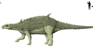 Újabb dinoszaurusz-maradványok a Bakonyban