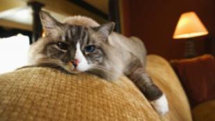 Brutális macskamosás – géppel...