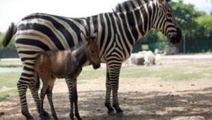 Különös állat született egy állatkertben