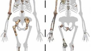 Szenzációs csontleleteket találtak