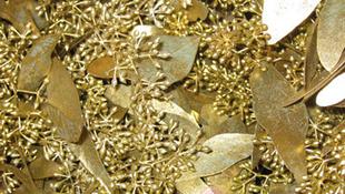 Aranyat találtak az eukaliptuszban