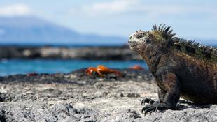 Pusztulás vár a Galápagos-szigetekre?