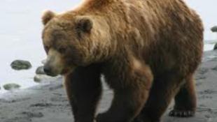 Egy ökölcsapással futamított meg egy medvét egy nő