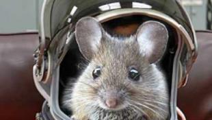 Állatok az űrben – Gagarin lemaradt