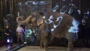 Buborékba zárták az elefántot