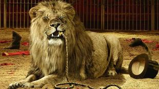 Kiszabadult az egy oroszlán a magyar cirkusz előadásán