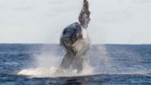 Megdöbbentő hasonlóság a bálna és a pelikán közt