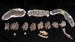 15 millió éves óriáskigyót találtak Bajorországban