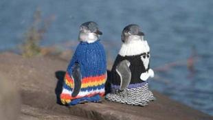 Meztelen pingvinek kötött ruhában pózolnak