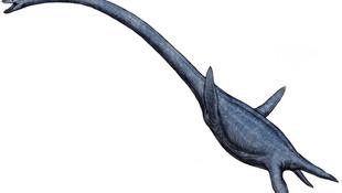 80 millió éves tengeri ragadozó rejtőzött a kövek között