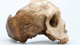 Több százezer éves emberi maradványokat találtak