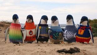 Pulóveres pingvinek a parton