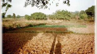 Újra él az ősi módszer: pucér lányok szántanak Biharban