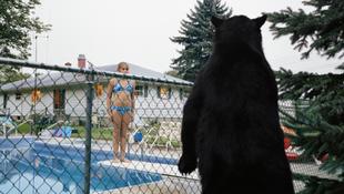 Medve garázdálkodott az uszoda körül