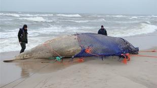 Bálnát találtak a lengyel tengerparton
