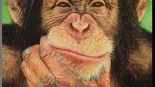 A majmok titokzatos ásítása