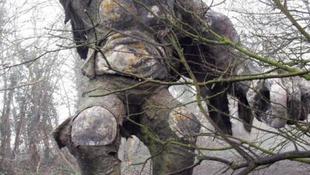 Hatalmas erdei szörnyre bukkantak