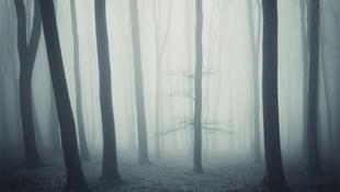 Ismeretlen eredetű ködbe borult az erdő