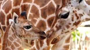 Milyen az Állatkert, ha online?