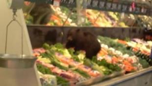 Medve sétált be a boltba
