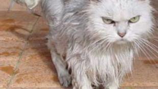 Kommandósok törtek rá a túszejtő macskára