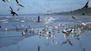 Megszállták a várost a madarak-az emberek ölik őket