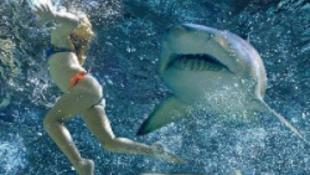 Példátlan cápatámadások a tengerparton