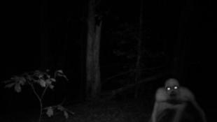 Valódi szörnyek – a 10 legbizarrabb lény, amit a Földön láttak
