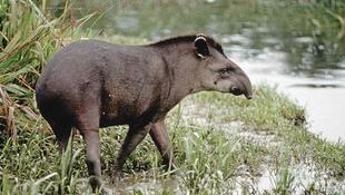 Óriási felfedezés az Amazonas vidékén