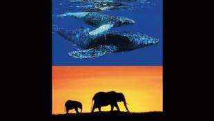 Lenyűgöző természetfilmmel harcol a Disney a klímaváltozás ellen