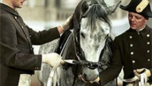 Megfázás söpört végig a lovakon-rengeteg turista maradt hoppon