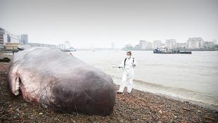 Partra vetett bálna Londonban