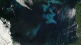 Látványos planktonvirágzás az Északi-tengeren