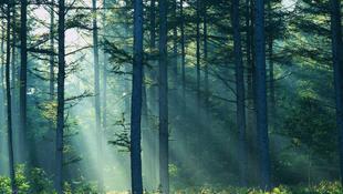 Mágikus fával nyomhatjuk le Európát
