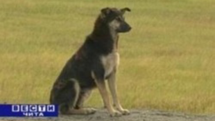 A világ leghűsegesebb kutyája