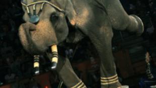 """""""Akik cirkuszjegyet vásárolnak, támogatják az állatkínzást"""""""