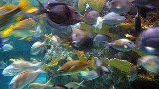 Eltűnnek a halak az Egyenlítő környékéről?