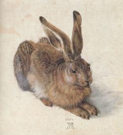 Egy nyuszi a Dürer kertből