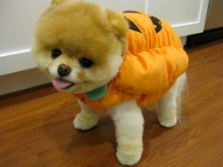 A Halloween Boo-t is megihlette