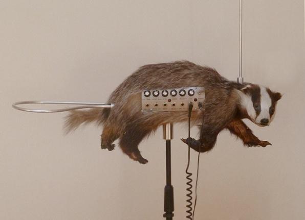 fotó: The nervous squirrel